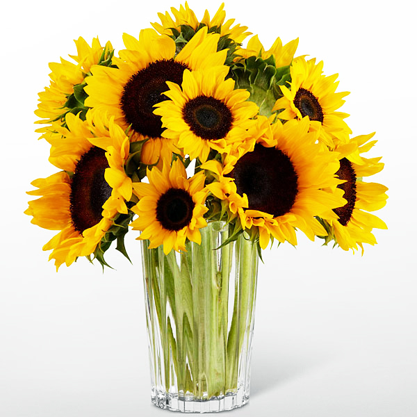 Order 12 Sunflowers In Vase To Philippines