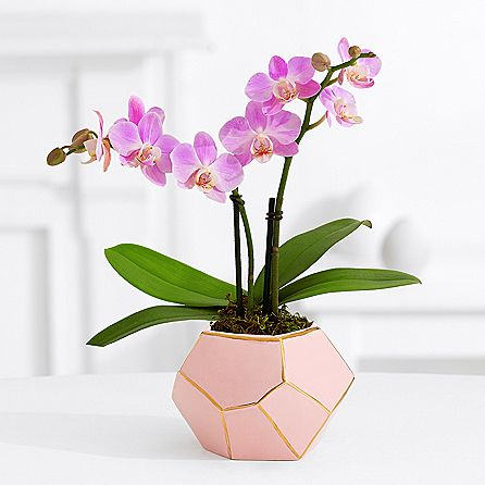 Delivery Pink Mini Orchid To Philippines