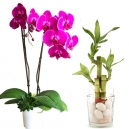 Mixed Plants
