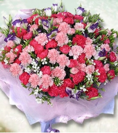 66 Red & Pink Carnations