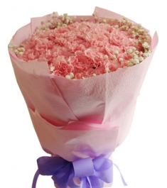 33 Pink Carnations