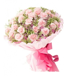 30 Pink Carnations