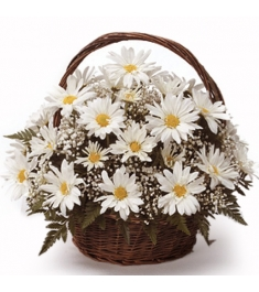 White Daisy Sympathy Basket  Send to Philippines