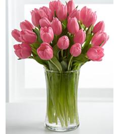 19 tulips vase online philippines
