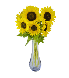 6 Pieces Sunflowers in Vase