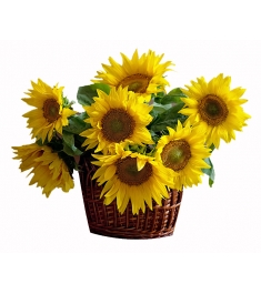 sunflowers in basket to philippines