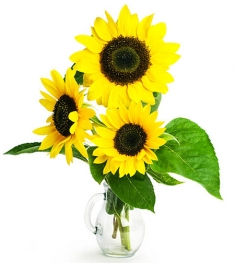 three pieces sunflower in vase
