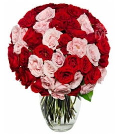 50 Blooms of Pink and Red Roses Delivery to Philippines