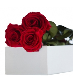 3 Pcs Roses Red Roses in Box