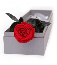 Single Red Ecuadorian Roses Rose in a Box