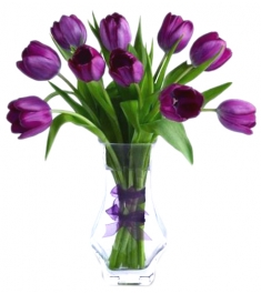 10 pcs purple holland tulip in glass vase to philippines