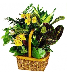 Green Plant Basket Delivery To Philippines