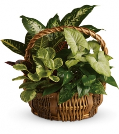 Emerald Garden Basket Delivery To Philippines