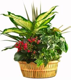 Indoor Gardening Plants Delivery Philippines