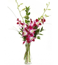 5 Pcs Purple Orchids in a Vase