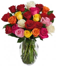 24 Rainbow Roses Send to Philippines