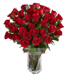 36 Red Roses Send to Philippines