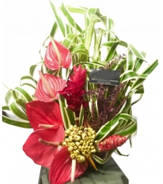 Anthurium in a Basket Arrangements For All Saints' Day