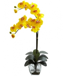 Double Phalaenopsis Orchid in Vase To Philippines